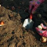 Ogród Społecznościowy Fort Bema - jesienna akcja sadzenia kwiatów