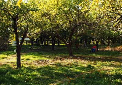 Ogród Społecznościowy Fort Bema - jesienne porządki