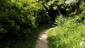 Ścieżka pomiędzy Hubala a Spychowską