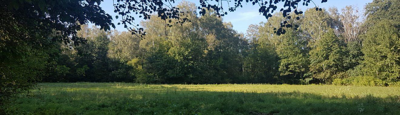 Polana w Lesie Bemowo