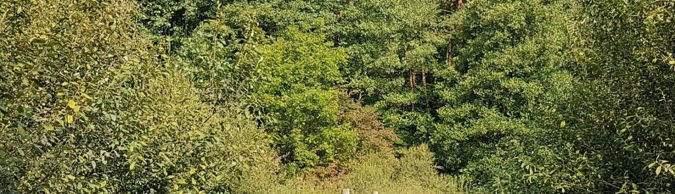 Rezerwat Łosiowe Błota - kładka