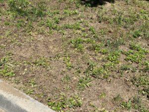 Trawnik po koszeniu